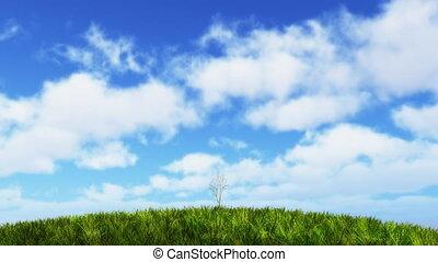croissant, ensoleillé, arbre, hill.
