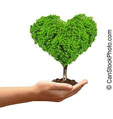 croissant, forme coeur, arbre