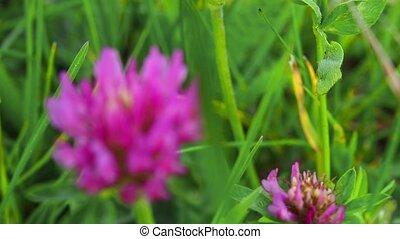 croissant, ground., fleurs