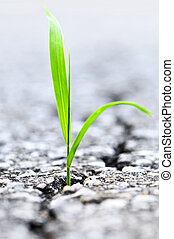 croissant, herbe, asphalte, fissure