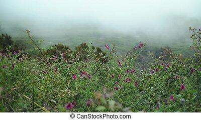 croissant, lilas, niveau, wildflowers, nuage, montagnes