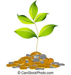croissant, plante, richesse