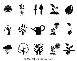 croissant, pousse, ensemble, arbre, icônes