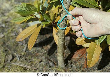 croissant, soutien, rhododendron