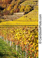 croissant, vin, terrasses, colline