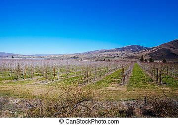 Cromwell Winery in New Zealand