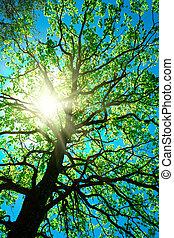 crone, arbre, résumé, ciel