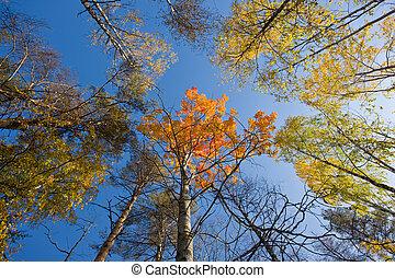 autumn sunny wood