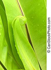 crooked leaf