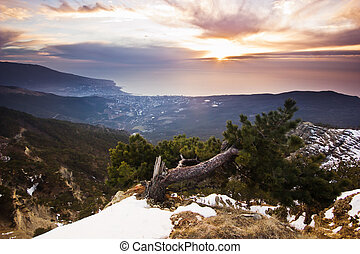 crooked pinetree at dawn above the sea in mountains