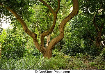 Crooked tree in forest
