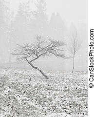 Crooked tree in the winter forest. Winter snow landscape.
