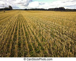 Crop field landscape