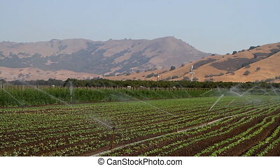 Crop Irrigation - Farm irrigation system waters a large crop...