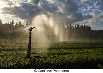 Crop irrigation with a water cannon