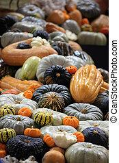 Crop of pumpkins, squash and gourd - Mixture of pumpkins, ...