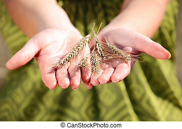 A picture of a handful of crop over green background