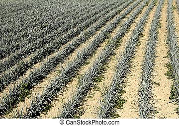 Crop planting