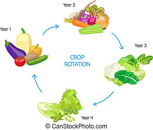 Crop rotation agricultural practice, farming seasonal cycle,...