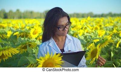 Crop scientist examining sunflowers seed in field