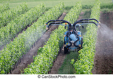 Crop spraying - Spraying of grapevines in vineyard in france