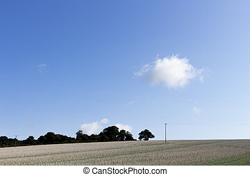 Crop stubble after harvest left on farmland field in rural...