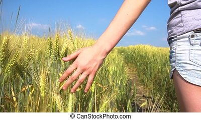 Crop tenager touching cereal grass - Teenager girl walking...