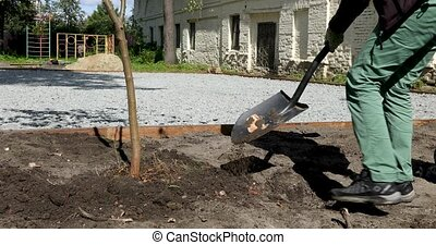 Unrecognizable groundskeeper using spade to throw soil while planting tree sapling in yard on sunny day