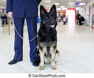 Cropped image of a dog for detecting drugs at the airport standing near the customs guard.