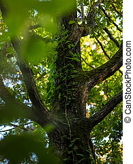 Cropped image of a tree trunk covered in wild ivy. Vertical view.