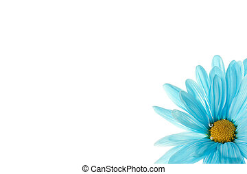 cropped image of blue daisy - Cropped image of blue daisy on...