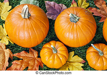 cropped image of halloween pumpkins with autumn leaves