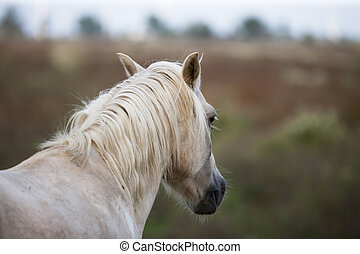 cropped view of a horse