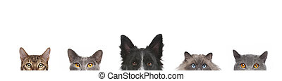 Cropped view of dog head and cats heads