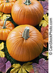 cropped view of halloween pumpkins arranged with autumn leaves