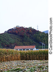 Crops and houses in rural areas