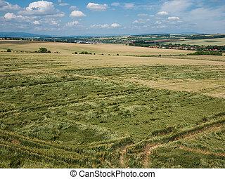 Crops damaged in a field