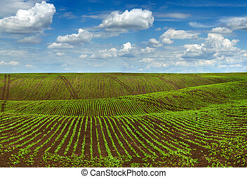 crops field, agricultural hills landscape with beautiful sky