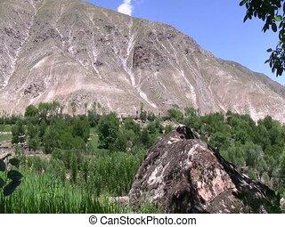 Crops growing in Afghanistan - Food crops growing in...