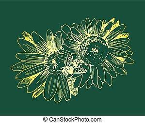 croquis, abeille, miel, flowers., vecteur, collects, dessiné, main