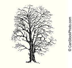 croquis, arbre, illustration, main, vecteur, dessiné