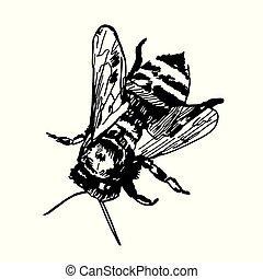 croquis, bee., main, miel, arrière-plan., vecteur, illustration, dessiné