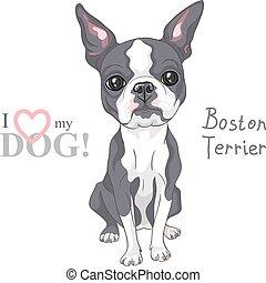 croquis, boston, race, chien, vecteur, sérieux, terrier