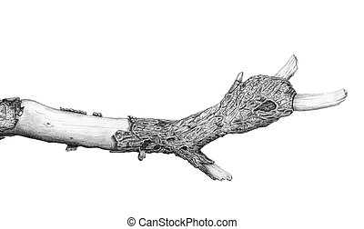croquis, branche