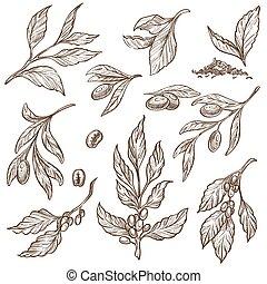croquis, branches, nourriture, isolé, cacao, olive, haricots, légume