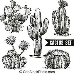 croquis, cactus, ensemble