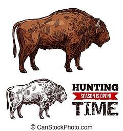 croquis, chasse, affiche, vecteur, temps, buffle
