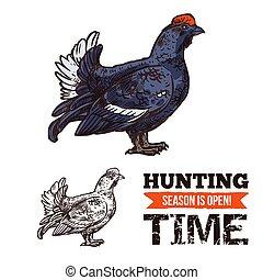 croquis, chasse, capercaillie, saison, affiche, oiseau