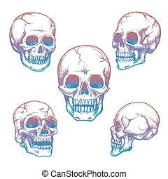 croquis, coloré, crâne, collection, icônes