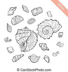 croquis, coquille, collection., set., style, main, seashell, dessiné